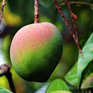 Comprar Frutales Subtropicales